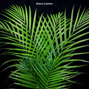 Areca Leaves